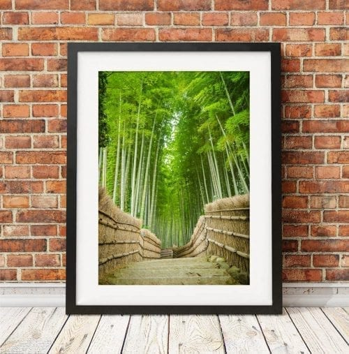 Arashiyama Bamboo Forest in Japan Travel Photography